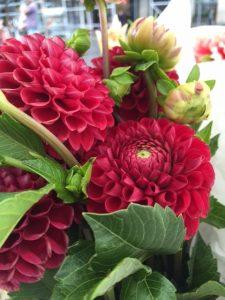 The Long Season; Delight of the Dahlia – As the Garden Season Draws to a Close